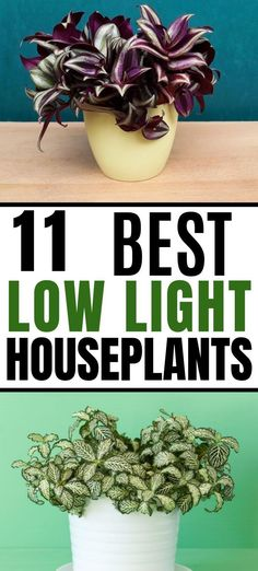 Best low light indoor houseplants for your home. These plants are perfect for rooms where there isn't much natural sunlight such as bathrooms, bedrooms, living rooms, or kitchens. Gardening 11 Best Low Light Indoor Plants for Your Home Indoor Plants Clean Air, Indoor Plants Low Light, Low Light Houseplants, Low Light Succulents, Indoor Cactus, Outdoor Plants, Outdoor Gardens, Kitchen Plants, Bathroom Plants