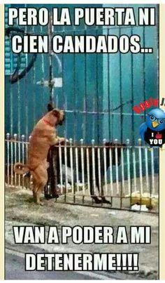 El amor no tiene barreras.....jajajaa
