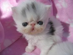 this picture makes me want to have a cat. haha. so cute!