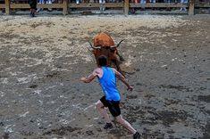 De Todo un Poco: Vacas Hermanos Arriazu en Mélida (3) Black Lagoon, Cows, Siblings, Fiestas