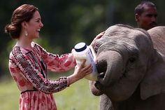 The Duchess of Cambridge feeds a baby elephant at the Centre for Wildlife Rehabilitation and Conservation