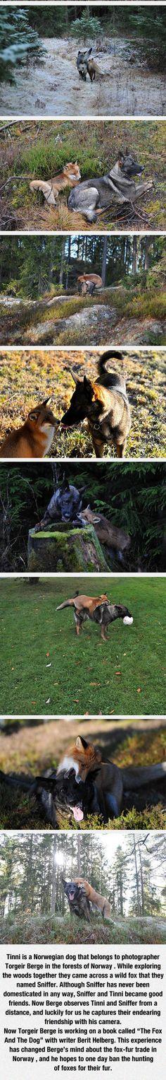 funny-hound-fox-snow-winter-friends-woods
