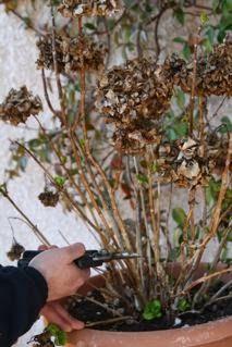 Hydrangea, Herbs, Garden, Flowers, Plants, Garten, Hydrangea Tree, Lawn And Garden, Herb
