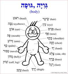 hebrew-human-anatomy-with-dual-forms-1.jpg - Buscar con Google