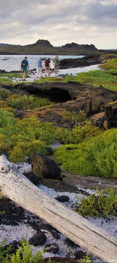 Life List, Travel and Adventure: Visit the Galapagos Islands