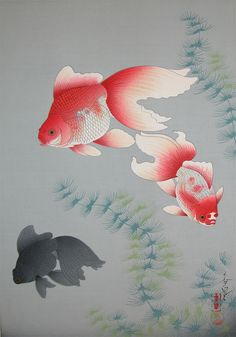 Bakufu Ohno: Goldfish                                                                                                                                                                                 More