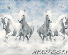 Discover Ideas About Horse Wallpaper
