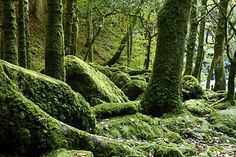 Killarney Photos at Frommer's - The mossy woods of the Mossy Woods Nature Trail provide a habitat for local birdlife. Travel Sights, Travel Memories, Future Travel, Ireland Travel, British Isles, Video Photography, Habitats, Family Travel, Places Ive Been