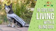 BLIND DOG10 Tips for Living with a Blind DogBy Katie ShannonLosing use of one of your senses can be a real challenge, including for our dogs. Many dogs will loose eye sight over time with age, degeneration or disease, to varying degre...