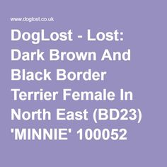 DogLost - Lost: Dark Brown And Black Border Terrier Female In North East (BD23) 'MINNIE' 100052