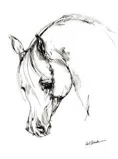 The Arabian Horse Sketch