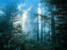 Mythes et legendes de Broceliande: Location de gite