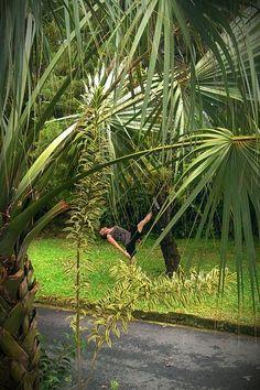 #SplitsOnTrees San Isidro, Costa Rica