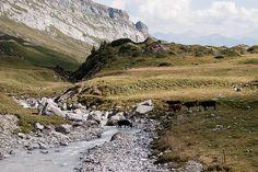 Auf der Alp Dip, Facebook, Landscape, Photography, Salsa Music, Photograph, Photography Business, Landscape Paintings, Photoshoot