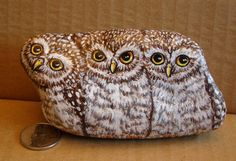 Owls painted on a rock