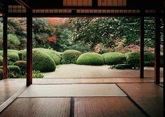 harmonisch, garten, japanisch, japanischergarten, Japan,  pflanzen, modern, holz, holzboden, haus