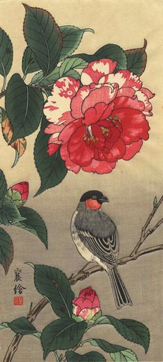 Bullfinch and Peony by Jo (Hashimoto Yuzuru) [Camelia, not Peony? Japanese Artwork, Japanese Painting, Japanese Prints, Asian Flowers, Japanese Flowers, Botanical Drawings, Botanical Art, Chinoiserie, Peony Painting