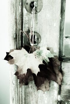 ♔ Autumn Green