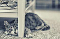 Cute cat😻 www.youtube.com/c/WeMeow #cat #cats #wemeow #meow #catlife #cutecat #catlove #gatos #gatti #koty #katze #chats #kitty #kitten #kittens #lovecat #funnycat #catofinstagram #catsoftumblr #catstagram #instapets #instacat #pet #pets #catlover #catnature