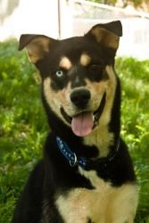 Kipling @ Louie's Legacy Animal Rescue, Cincinnati