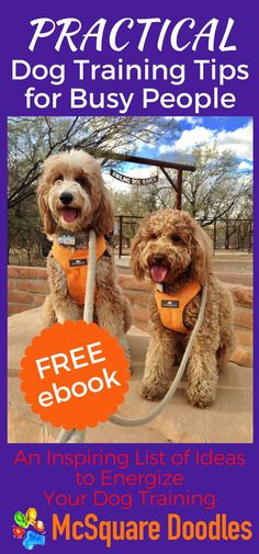 Do you want to spend more time training your dog, but you're not sure where to find that time? Read our FREE 45-page ebook for tips and advice to work effectively with your dog every day. Grab this A to Z list of inspiring ideas to energize your training journey with your dog by subscribing to our community of therapy dog enthusiasts! #dogtraining #dogtrainingideas #therapydogideas #mcsquaredoodles