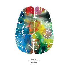 Axial Human Brain Print