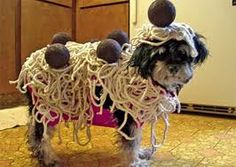 Dog dressed as skettie and meatballs?