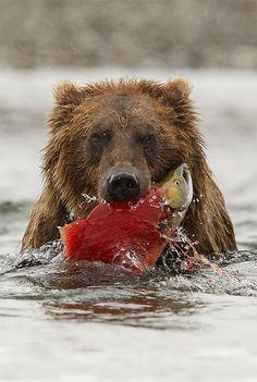 ours-tient-saumon-gueule