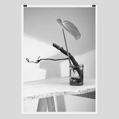 Hydra - Screen Print by Claude Gasser White Wall Decor, Silk Screen Printing, White Art, Photographic Prints, Online Art Gallery, Fine Art Photography, New Art, Wall Art, Screenprinting