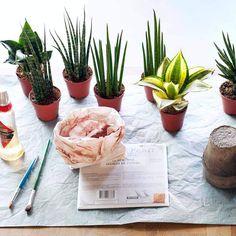 Wohnidee DIY:  Bogenhanf im Kupferkleid