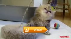 FUNNY Crazy Cats FUNNY Animals Compilation of the Funniest Pets in the World  Funny Crazy Cats Funny Animals Compilation of the Funniest Pets in the World SUBSCRIBE BECOME A FOLLOWER FOR MORE AWESOME ANIMAL  on Pet Lovers