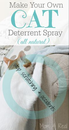 Make your own all natural cat deterrent spray. Homemade Cat Deterrent Spray – Stop The Scratching and Accidents Crazy Cat Lady, Crazy Cats, Diy Jouet Pour Chat, Cat Deterrent Spray, Natural Cat Repellant, Le Zoo, Gato Gif, Cat Hacks, Cat Pee