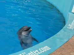Winter & friends at the Clearwater Aquarium in FL!