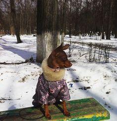 Далеко гляжу....высматриваю весну #киссофтендер #киссофтендерюдита #korolev #toyterrier_club #russkiytoy #tinydogs #yusta #воттакаявесна Image By: sveta_varia_jemmi_yusta http://bit.ly/teacupdogshq