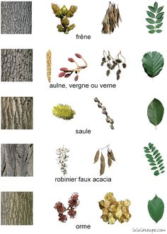 3 fiches pour apprendre à reconnaître les arbres de la forêt. Pour les petits... et les grands !
