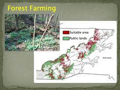 GIS mapping allows us to analyze topography to understand where non-timber forest products can grow best. Slide courtesy of the USDA's National Agroforestry Center.