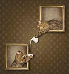 Чай с котом