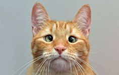 Animal Life @fabulousanimals   Jarvis P. Weasley, the cross-eyed cat, has found a new home