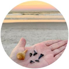 Jax Beach Shark Teeth