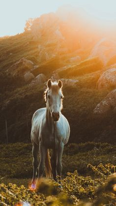 Animals are human friends, let's take a look at cute animal mobile wallpaper - kkcamille 2160x3840 Wallpaper, Cavalo Wallpaper, Horse Wallpaper, Stone Wallpaper, Animal Wallpaper, Most Beautiful Horses, All The Pretty Horses, Animals Beautiful, Cute Animals
