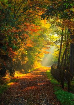 Sunlight in the forest (Flood Trail, Mineral Point, Pennsylvania) by Philip Balko on cr. Landscape Photography, Nature Photography, Color Photography, Beautiful Places, Beautiful Pictures, Amazing Photos, Simply Beautiful, Autumn Scenery, Nature Pictures