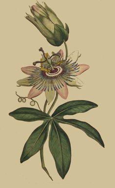 Para el bícep interno izquierdo, junto a otras flores