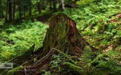 I was by pwaab #nature