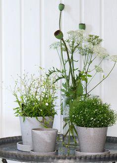 Introduce verde para tu casa #Affari #plantas #tendenciasdeco2015 #estilonordico