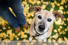 Dog and owner - Lifestyle Pet Photography Pittsburgh