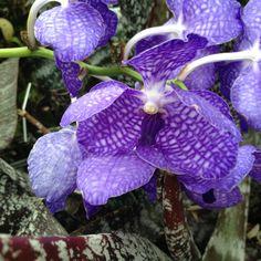 Orchid @ New York Botanical Garden