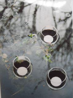 in de vijver: drijvend wijnglaswindlicht