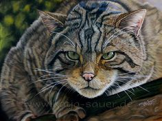 Scottish Wildcat by Katja Sauer | by katjasauer11