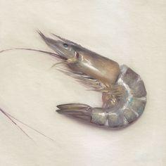 Shrimp - Faith Te