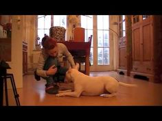 ▶ Ran kommen bei Fuß - YouTube Buffy, Tricks, Leo, Dogs, Animals, Dog Leash, Dog Food, Pooch Workout, Pets